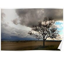 Tree and Storm Poster