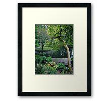 Burnham Beeches in Spring Framed Print