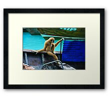 monkey in a boat Framed Print