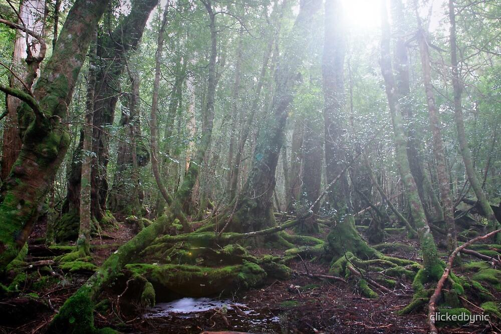 Sunlight through Ballroom Forest - Cradle Mountain, Tasmania by clickedbynic