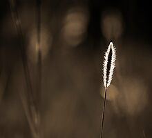 Go Lightly  by Shaun Colin Bell