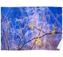 Blue Christmas, Summer Leys, Northamptonshire Poster