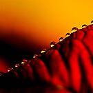 Velvet Drops by yaana
