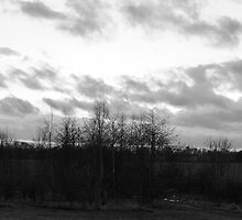 Trees, Litter and Cloudy Sky by SDSBerry