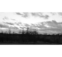 Trees, Litter and Cloudy Sky Photographic Print