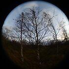 Trees by Sarah Horsman