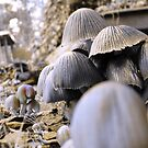 golden mushrooms by tego53
