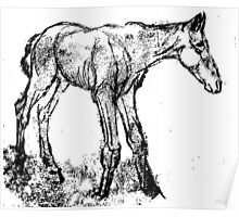 Newborn Foal Poster