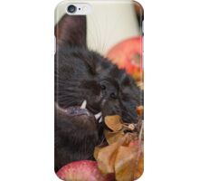 black cat on old barrel iPhone Case/Skin