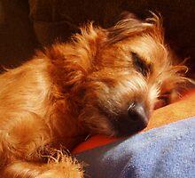 Doggie in Dreamland by Jane Underwood