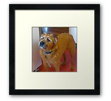 Waiting for the Treat Framed Print