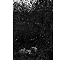 Litter in Bushes Photographic Print