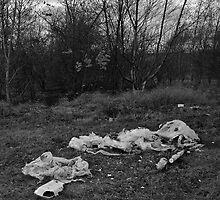 Litter on Grass by SDSBerry