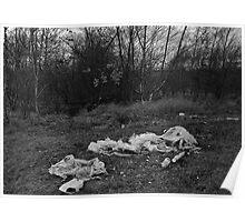 Litter on Grass Poster