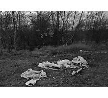 Litter on Grass Photographic Print
