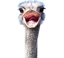 Goofy ostrich Photographic Print