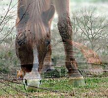 *Down on the Farm* by Darlene Lankford Honeycutt