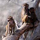 Babboons by Lolabud