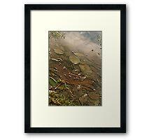 Sunken Leaves Framed Print