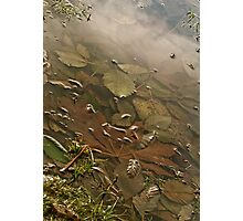 Sunken Leaves Photographic Print