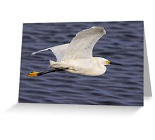 Snowy Egret In Flight Greeting Card