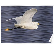 Snowy Egret In Flight Poster