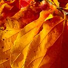 autumn leaves in a row by tego53