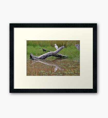 White Crane Framed Print