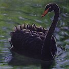 Black Swan by Michael Beckett