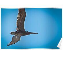 Pelican Overhead Poster
