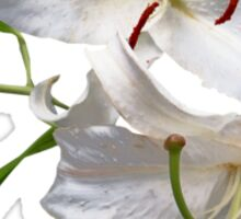 Two White Lilies Sticker