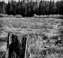 Meadow Stump by dwservingHim