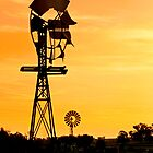Country Gold - Toowoomba Qld Australia by Beth  Wode