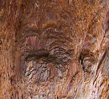 Sequoia wood up close by Trish Peach