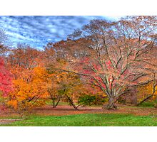 Fall Branches Photographic Print
