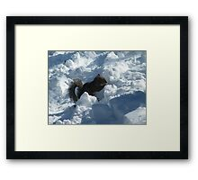 Squirrel in Snow, Central Park, New York  Framed Print