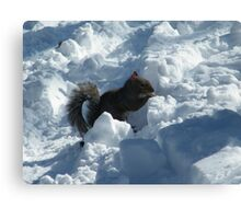 Squirrel in Snow, Central Park, New York  Canvas Print