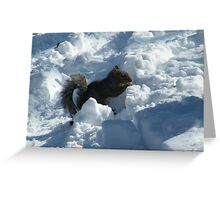 Squirrel in Snow, Central Park, New York  Greeting Card