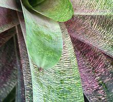 Succulent by Trish Peach