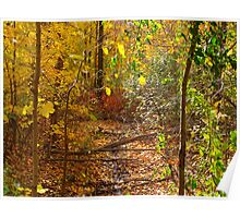 Wooded October Poster