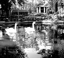 SWANS LAKE. B & W. by Vitta