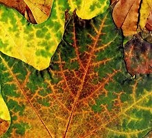 Detailed Fall Maple Leaf Texture 13 by AnnArtshock