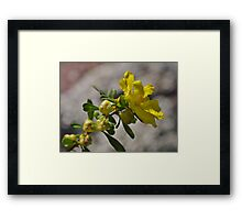Yellow Bush Flower  Framed Print
