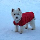 Born to the snow of the Highlands by MarianBendeth