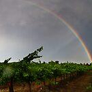 Barossa Rainbow by KathyT