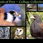 Birds of Prey ~ Collage Collection by Kimberly Chadwick