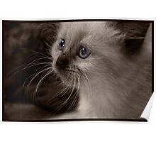 Little kitten with purple eyes Poster