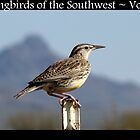 Songbirds of the Southwest ~ Vol 2 by Kimberly Chadwick