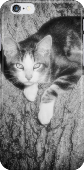 Here Kitty by Jim  Egner