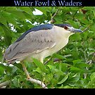 Water Fowl & Waders by Kimberly Chadwick